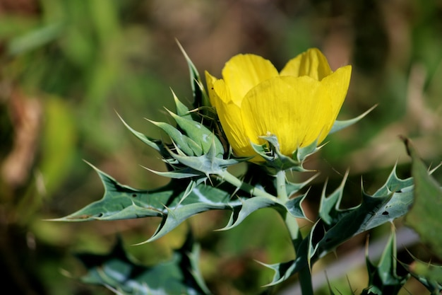 Nahaufnahme der wildpflanzenblumen