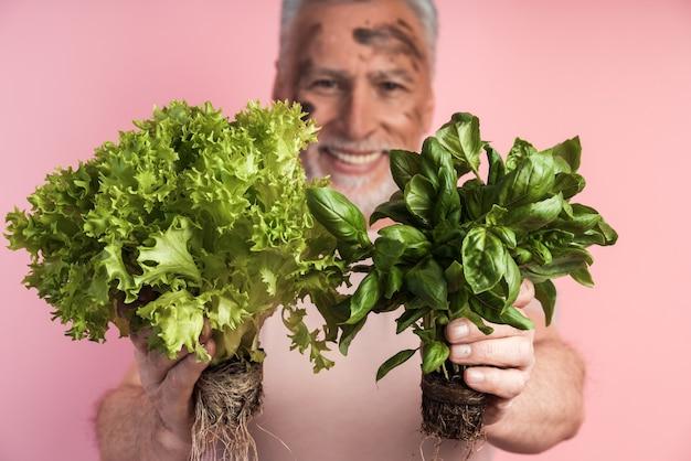 Nahaufnahme des älteren mannes, der frisches essen hält - salat und basilikum
