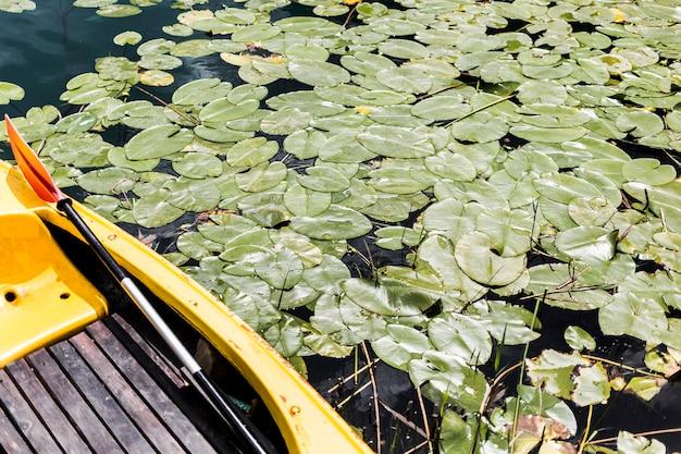 Nahaufnahme des bootes mit den grünen lilienauflagen, die auf teich schwimmen