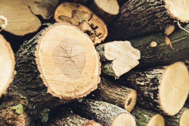 Nahaufnahme des brennholzes geerntet für den winter.