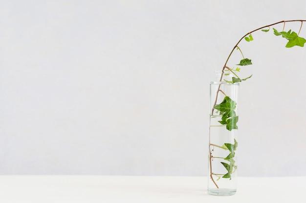 Nahaufnahme des efeus in der transparenten glasflasche auf weißem schreibtisch gegen hintergrund