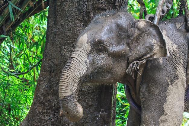 Nahaufnahme des elefanten