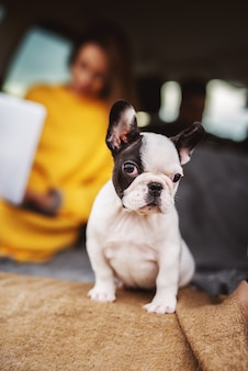 Nahaufnahme des entzückenden niedlichen kleinen hundes suchen