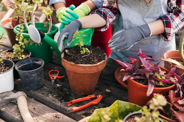 Nahaufnahme des gärtners mit topfpflanze und gartenarbeitwerkzeug auf holztisch