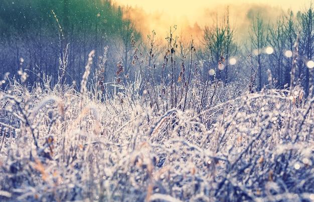 Nahaufnahme des gefrorenen grases am wintermorgen in den bergen.