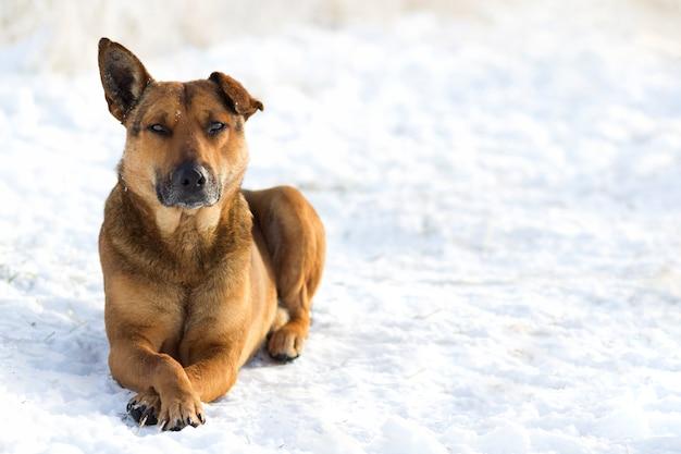 Nahaufnahme des gelben hundehaustieres auf weißem schnee draußen