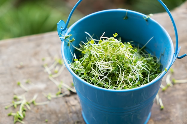 Nahaufnahme des geschnittenen gekeimten rucola-mikrogrüns in einem eimer.