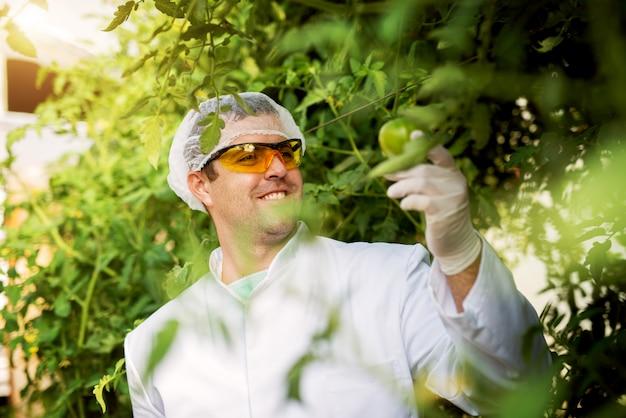 Nahaufnahme des geschützten modernen glücklichen bauern mit handschuhen und brillen, die grüne tomate im gewächshaus halten.