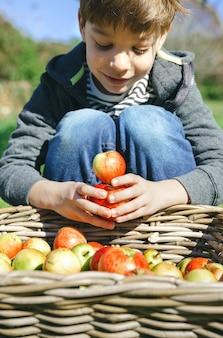 Nahaufnahme des glücklichen netten kindes, das mit frischen bioäpfeln über weidenkorb mit fruchternte spielt. natur- und kindheitskonzept.