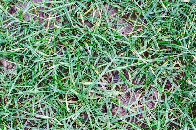 Nahaufnahme des grases, das den boden unter dem sonnenlicht tagsüber bedeckt