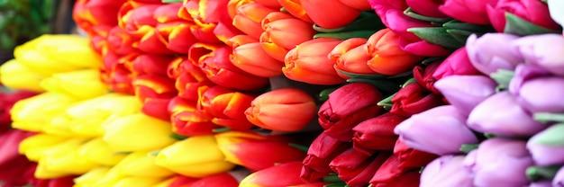 Nahaufnahme des großen straußes der mehrfarbigen tulpen. helles und sonniges foto. bündel frühlingsfrischer blumen. internationales frauentag und luxusgeschenkkonzept