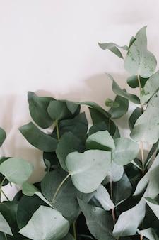 Nahaufnahme des grünblattzweigs auf weißem hintergrund