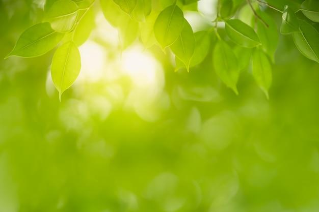 Nahaufnahme des grünen blattes der schönen naturansicht auf unscharfem grünhintergrund unter sonnenlicht mit bokeh