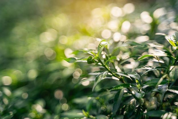Nahaufnahme des grünen blattes im garten, naturkonzept