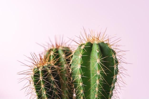 Nahaufnahme des grünen kaktus