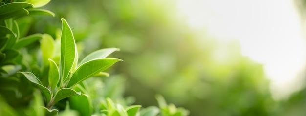Nahaufnahme des grünen naturblattes auf unscharfem grünhintergrund im garten mit bokeh und kopienraum unter verwendung als hintergrunddeckblattkonzept.