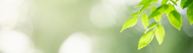 Nahaufnahme des grünen naturblattes auf unscharfem grünhintergrund im garten.