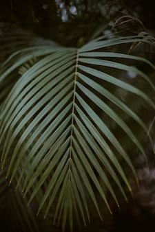 Nahaufnahme des grünen palmenblattes mit dunkelheit