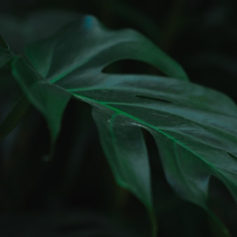 Nahaufnahme des grünen pflanzenblattes