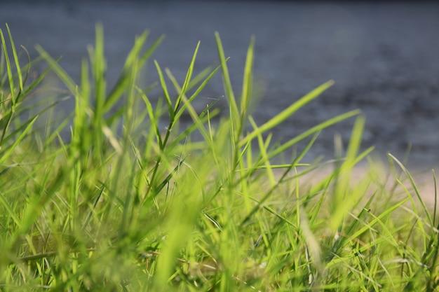 Nahaufnahme des grünen rasenplatz- und unschärfebündelbodens