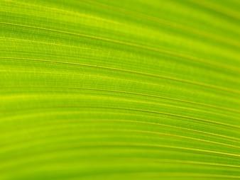 Nahaufnahme des grünen und gelben Palmblattbeschaffenheitshintergrundes