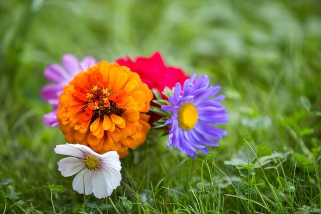 Nahaufnahme des hellen mehrfarbigen feldes des schönen herbstes blüht zusammensetzung