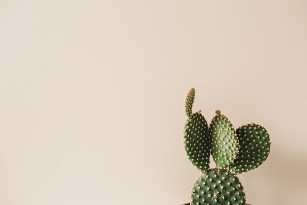 Nahaufnahme des kaktus auf beige