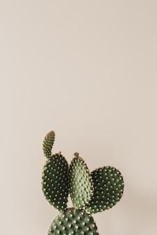 Nahaufnahme des kaktus auf beige.