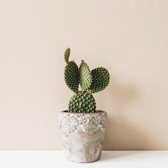 Nahaufnahme des kaktus im blumentopf auf beige. minimale neutrale blumenzusammensetzung.