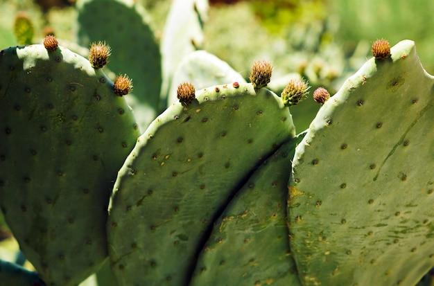 Nahaufnahme des kaktus unter dem sonnenlicht
