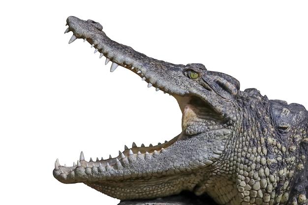 Nahaufnahme des kopfkrokodils zeigt maus und zähne auf dem felsen haben einen weg