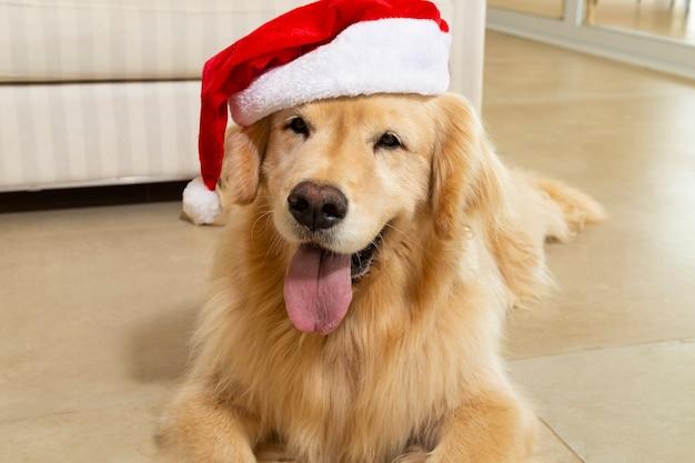 Nahaufnahme des labrador-hundes mit weihnachtsmannhut. weihnachten.