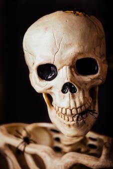 Nahaufnahme des menschlichen skeletts in spinnen