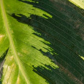 Nahaufnahme des natürlichen pflanzenblattstammes mit textur