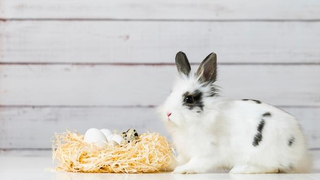 Nahaufnahme des niedlichen weißen häschens sitzt nahe strohnest mit eiern, auf holz.