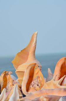 Nahaufnahme des orangefarbenen muschelhintergrunds