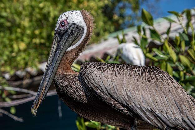 Nahaufnahme des pelikans, der auf stange steht