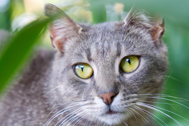 Nahaufnahme des porträts der grauen katze mit grünen augen auf grünem grashintergrund nicht-stammbaumkatzen