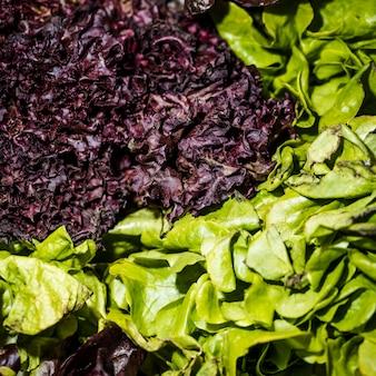 Nahaufnahme des roten und grünen kopfsalates
