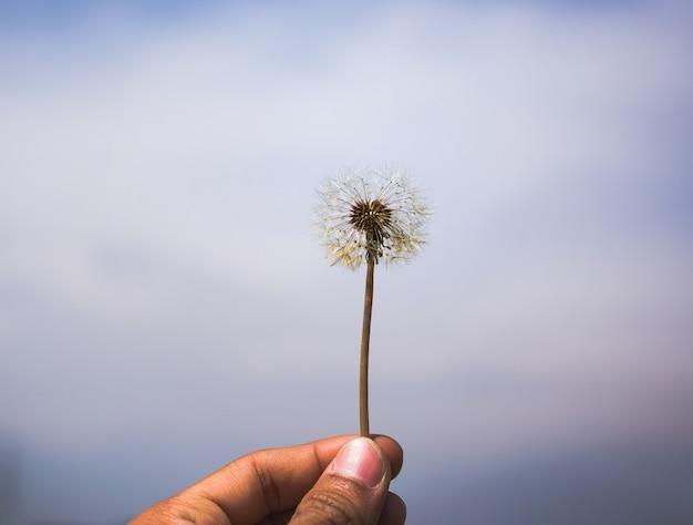 Nahaufnahme des schönen gartenblumenfeldes ein kleiner blumenhintergrund