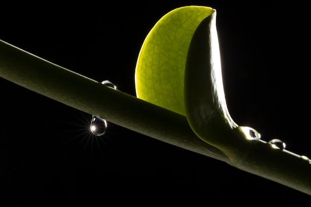 Nahaufnahme des schönen grünen blattes