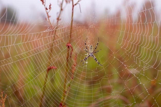 Nahaufnahme des spinnennetzes mit einer spinne