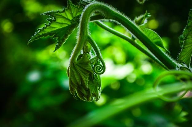 Nahaufnahme des spiralförmigen grünen blattes. ein neues blatt in grüner natur