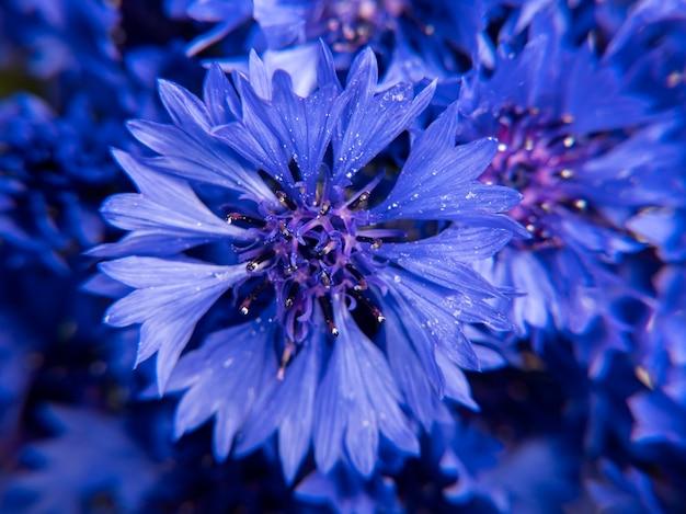 Nahaufnahme des straußes von blauen kornblumen