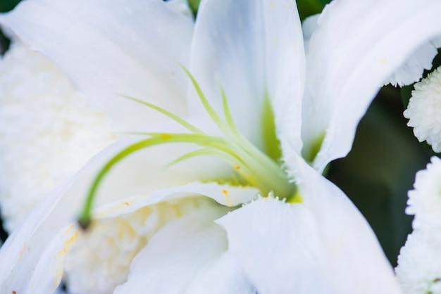 Nahaufnahme des strukturierten hintergrundes der weißen lilienblume