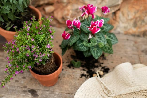 Nahaufnahme des transplantationsprozesses von pflanzen