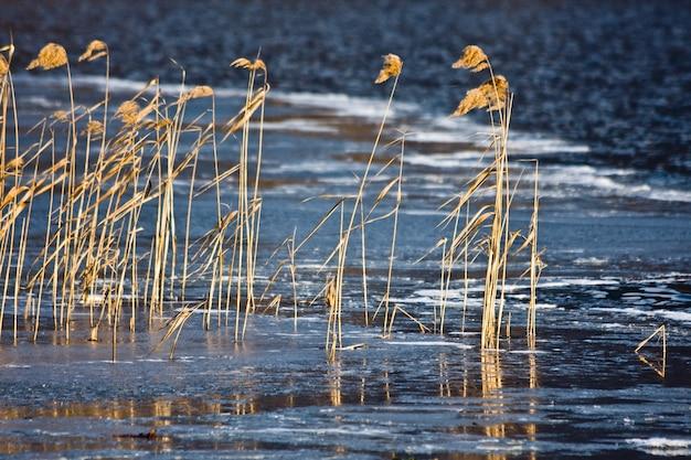Nahaufnahme des trockenen grases und des schilfs, die im wind auf unscharfem fluss wehen