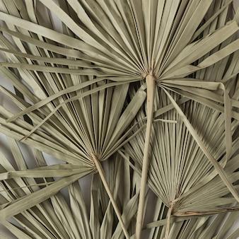Nahaufnahme des trockenen tropischen palmblattes isoliertes muster