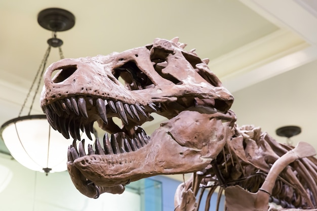 Nahaufnahme des tyrannosaurus-kopfes.