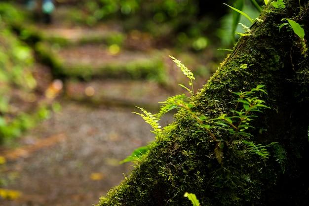 Nahaufnahme des üppigen mooses wachsend auf baumstamm im regenwald